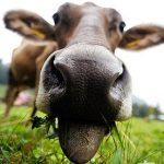 защо ли има толкова агресивни вегетарианци